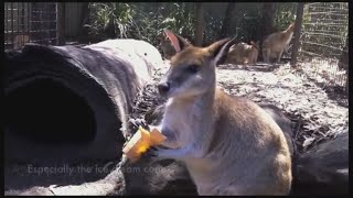 Native Australian Animals - Australian Wildlife Animals in Secured Sanctuary