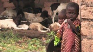 В деревне, откуда началась эпидемия Эболы, с апреля никто не заболел (новости)(http://www.epochtimes.ru ] Британские исследователи проследили распространение лихорадки Эбола и нашли деревню..., 2014-10-26T16:12:19.000Z)