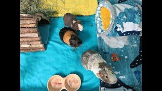 Guinea Pig POV Spot Clean: Fleece Cage Liners