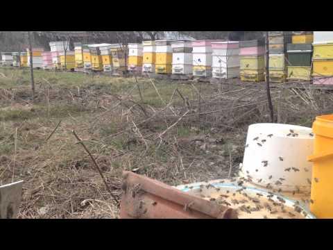 Бирена мая за пчели ,пролетно стимулиране .