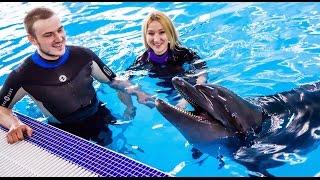 Невероятное предложение руки и сердца с дельфинами