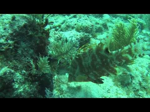 Elbow Reef- Key Largo