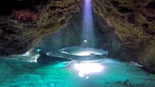 Sharks on Mystery Island