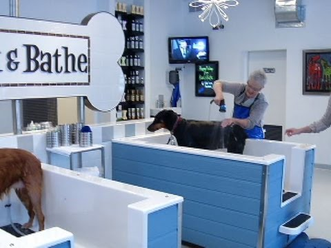 Business matters self serve dog wash reaches robbinsdale youtube business matters self serve dog wash reaches robbinsdale solutioingenieria Images
