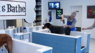 Business Matters: Self-serve Dog Wash Reaches Robbinsdale