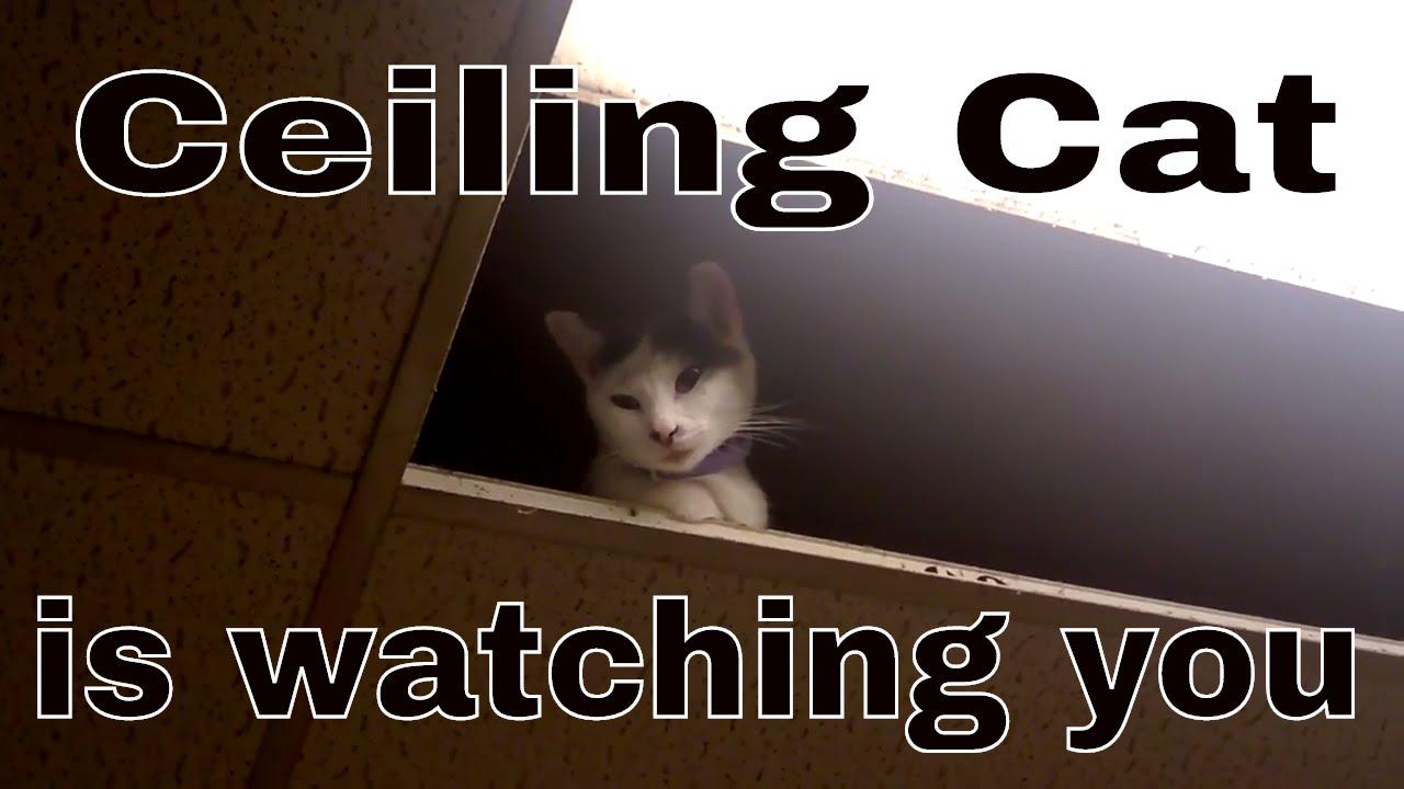 ceiling cat 😺 - youtube