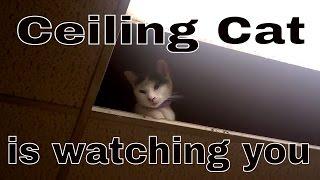 Ceiling Cat 😺