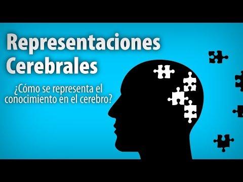 Neuropsicologia e Modelos PsicolГіgicos nas Dificuldades de Aprendizagem