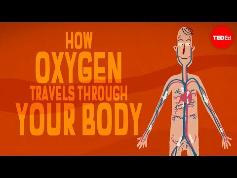 Oxygen's Surprisingly Complex Journey Through Your Body - Enda Butler