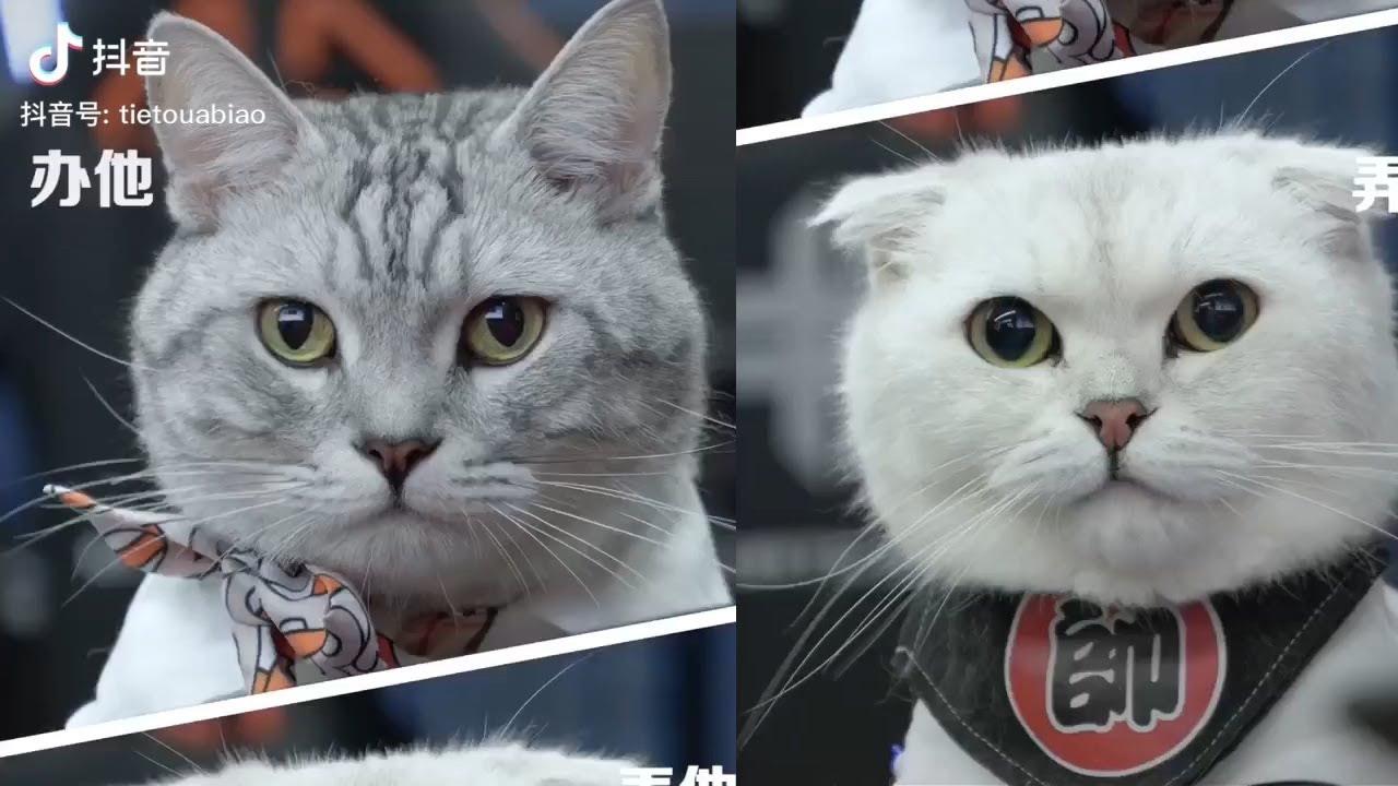 【視覺剪輯】貓在中國 系列13 Visual editing   在下鐵頭阿彪 - YouTube
