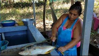 Cocinando con Gladis La Sirenita: Descuartizando el tiburon. Sopa de pescado. Parte 1/4 thumbnail