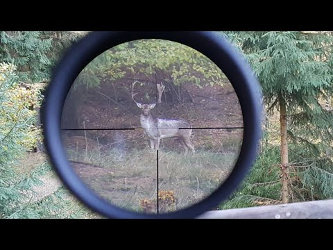 Damwildbrunft im Birkenbruch - Hunter Brothers