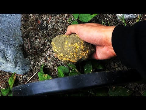 663-grams of monstrous GOLD NUGGET uncovered in VOLCANIC ROCK!