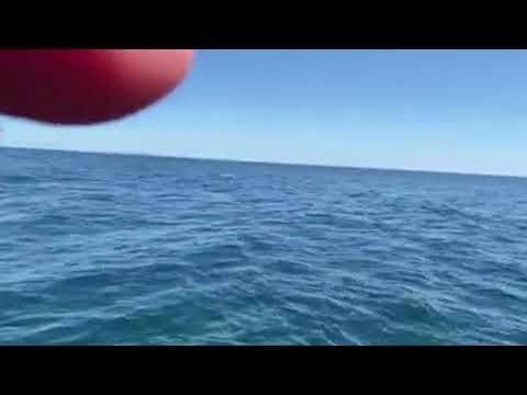 Жители Владивостока встретили у берегов Русского острова группу косаток