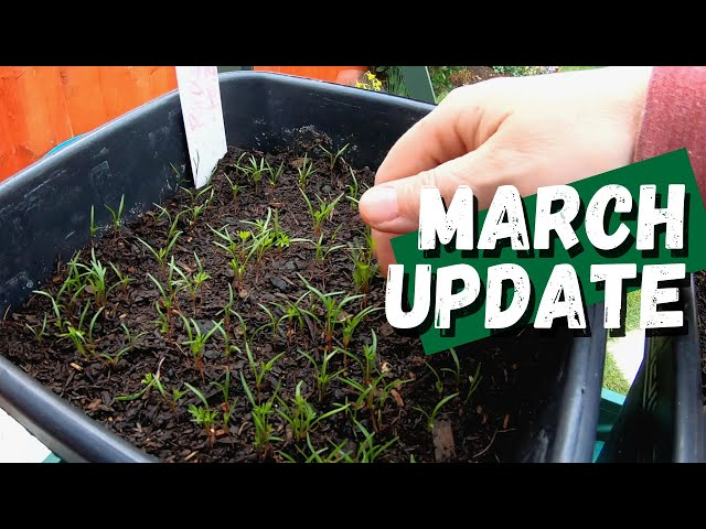 Our first garden update March 2021