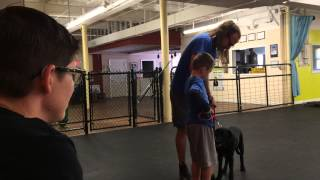 Training With Kids, Poop And All. Diy Dog Training