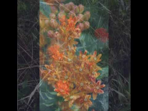 PlantButterfly.mpg