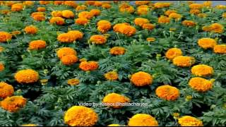 Oi Khede Khed Kori & Hymn. Shyama Sangeet