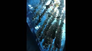 動物専門学校 トリマー 動物看護師 アクアリウム 動物のお仕事・水族館飼育員・フィールドワーク・仙台 thumbnail
