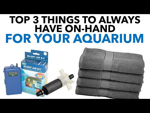 Top 3 Things To Always Have On-Hand For Your Aquarium | BigAlsPets.com