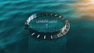 مراحل مشروع الاستزراع السمكي بطريقة الاقفاص العائمة بولاية قريات