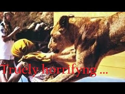 9 Real INSANE Animal Attack Movies   Lion and Tiger , also find links of  Collectors movies