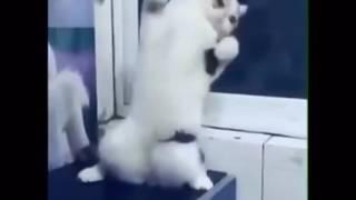 Кошка зажигает