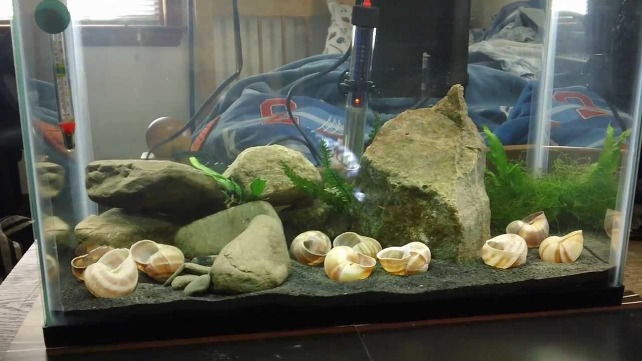 how to set up a 10 gallon gerbalarium