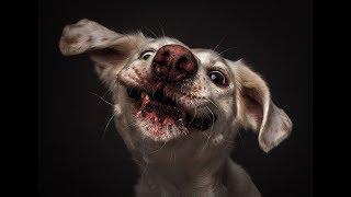 Собаки, Которых Оставили Охранять Дом, А Как Это Делать Не Рассказали!! 😁