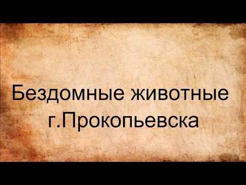 знакомства прокопьевска