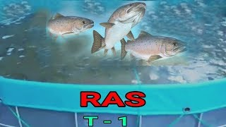 RAS New Technology/ Set up | Sustainable Aquaculture