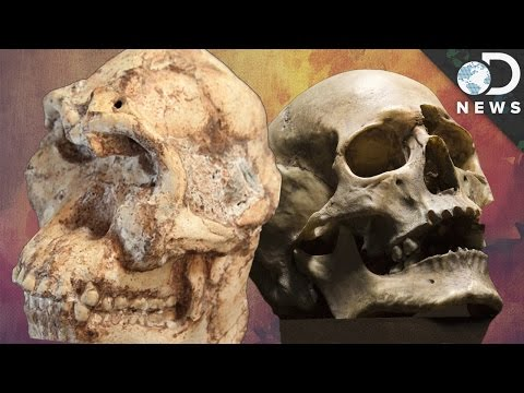 The Fight Over This 3.7 Million Year Old Human Ancestor