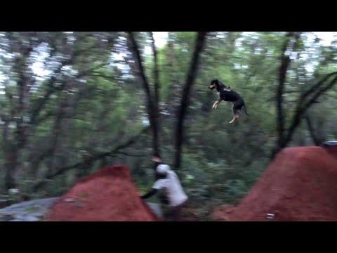 Dog Lands Amazing Jump || ViralHog