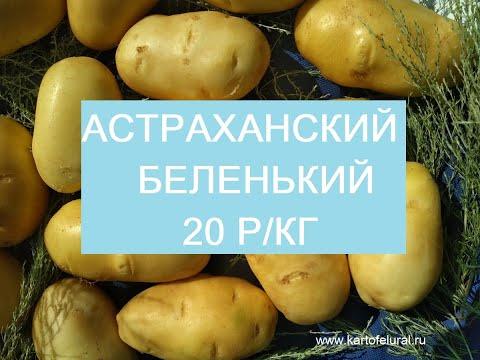 Картофель Урал начинает отгрузку картофеля из Астраханской области. Сорт Ривьера.
