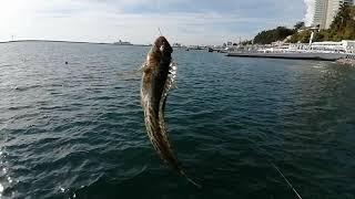 Рыбалка в Сочи осень 2020
