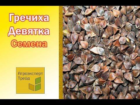 В украине гречка сырая гречиха: купить гречку гречиху, продать гречку гречиху на украине,. Продам семена гречихи сорт