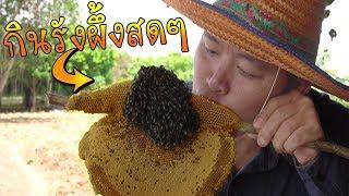 กินผึ้งแบบนี้ซิ-สุดจริง-คลิปนี้อันตรายมาก-คำโอ๊ะๆ-joe-channel