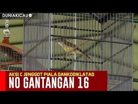 AKSI CUCAK JENGGOT No 16 Piala DANKODIKLATAD