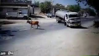 OMG!! TRUCK HITS THE COW !! AMAZING DRIFTING BY TRUCK!!#ACCIDENT#TRUCK#INDIA