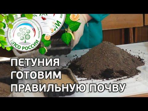 Выращивание петунии из семян. Подготовка почвы для посева семян петунии.