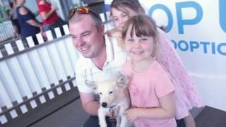 RSPCA's Pop Up Adoption 2017