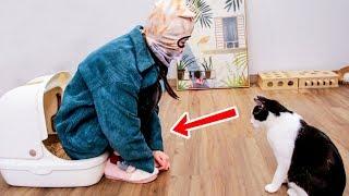女主人为教猫咪上厕所-竟亲自示范全过程-猫都惊呆了