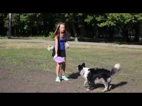 Вопрос: Как научить собаку ловить летающую тарелку?
