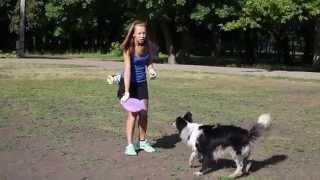 Обучение собаки ловить диск в воздухе
