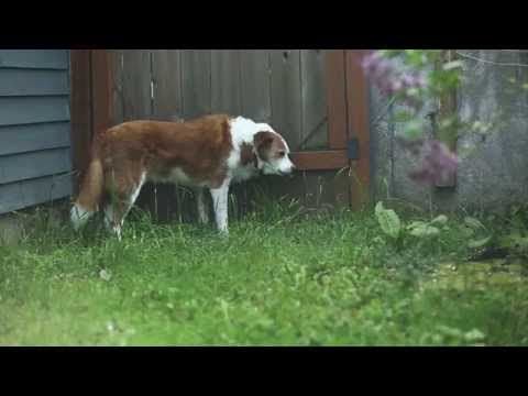 Banfield Pet Hospital Ask A Vet - Why Does My Dog Eat Grass?