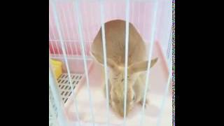토끼키우기 호텔링 온 토니와 함께 즐거운 추억 만들기