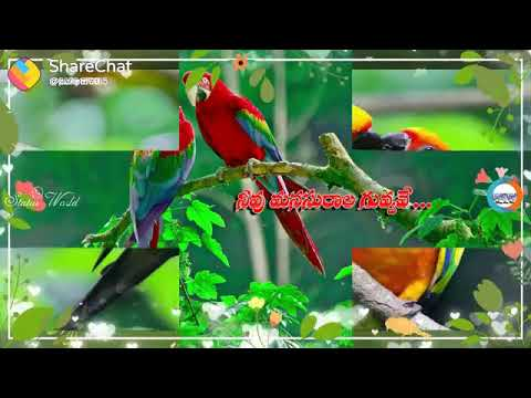 Best Telugu songs