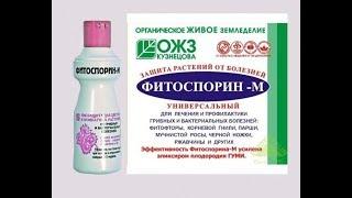 Фітоспорін-М Для рослин. Як правильно використовувати.