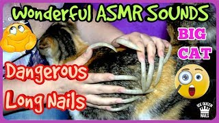 NEW SUPERLATIVE ASMR video ever! VERY LONG AND SHARP NAILS scratch hard a big CAT. FANTASTIC sounds
