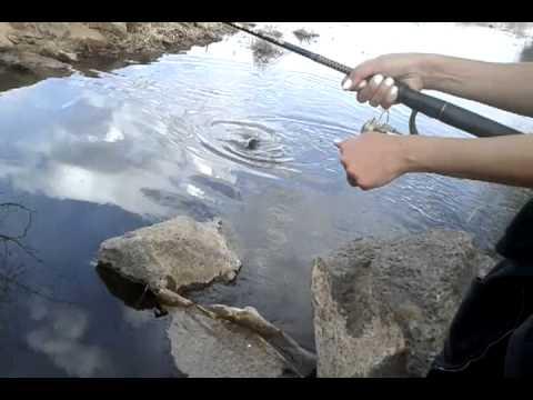 New mexico fishing Rio grande river